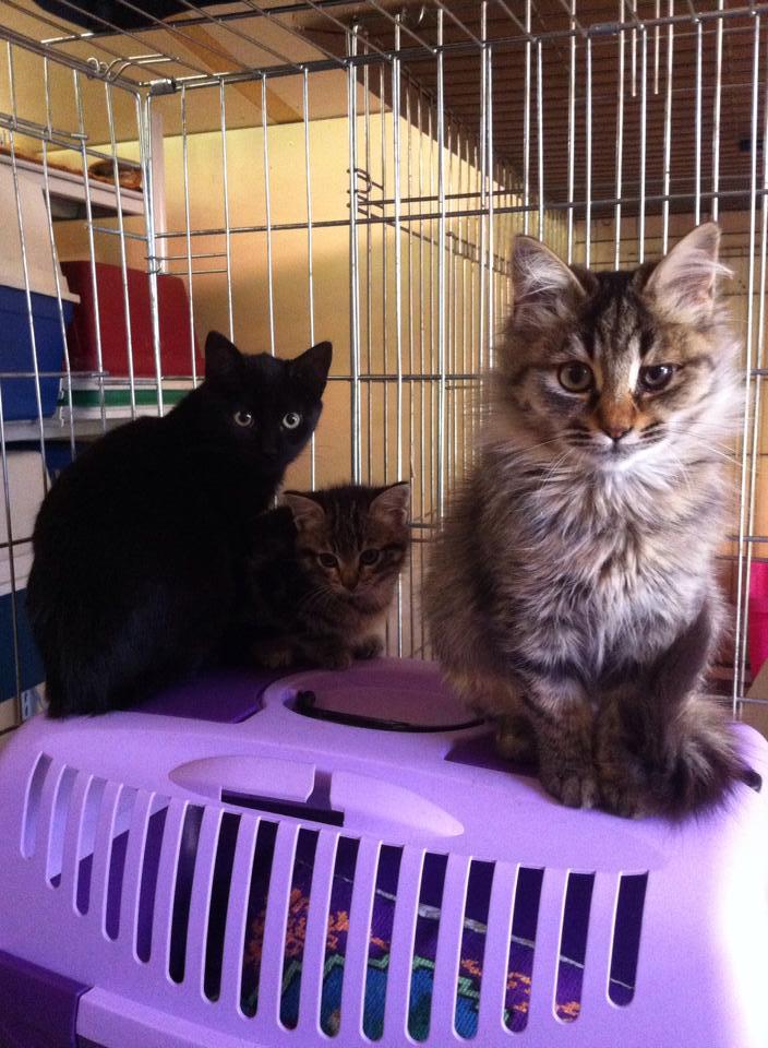 I gattini di Monghidoro